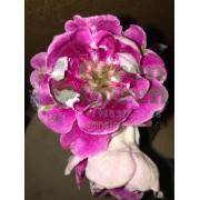 Глоксиния Пурпурное Сердце (Е.В. Слюсарь)