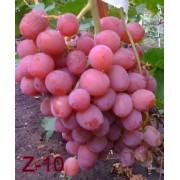 Виноград столовый Z-10