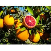 Апельсин Моро