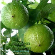 Бергамот или Горький апельсин
