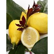Лимон Фемминелло Каррубаро