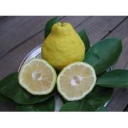 Лимон Санбокан