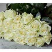 Роза чайно-гибридная Avalanche (Аваланж)
