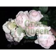 Роза флорибунда Герцогиня Кристиана