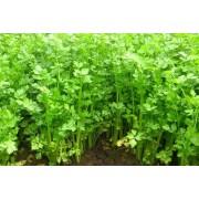 Сельдерей Нежный листовой белый пакет Аэлита 0,5 г