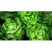 Салат  полукочанный Изумрудная зелень белый пакет Аэлита