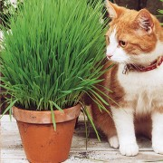 Трава для кошек Аэлита