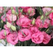 Эустома махровая розовая F1 Цветущий сад
