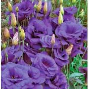 Эустома махровая синяя F1 Цветущий сад 5 шт