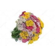 Тысячелистник Яркий букет смесь Цветущий сад