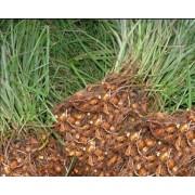Чуфа (земляной миндаль) Дом семян (Сортсемовощ)